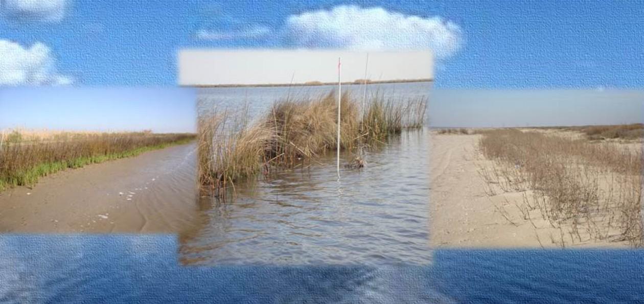 Gulf Coast SWCD